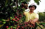 从哥伦比亚咖啡看咖啡生产问题:农民要追求质还是量?