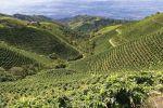 咖啡产地 | 第三大咖啡出口国之哥伦比亚,咖啡产区和产季简介
