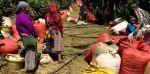 咖啡产区 | 危地马拉咖啡产区及分级制度介绍